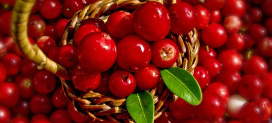 cranberries as a natural cure for bladder infection